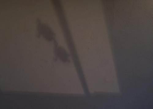 クロヌマタカトシ 企画展 気配 Shoka: 沖縄 木彫 美術館